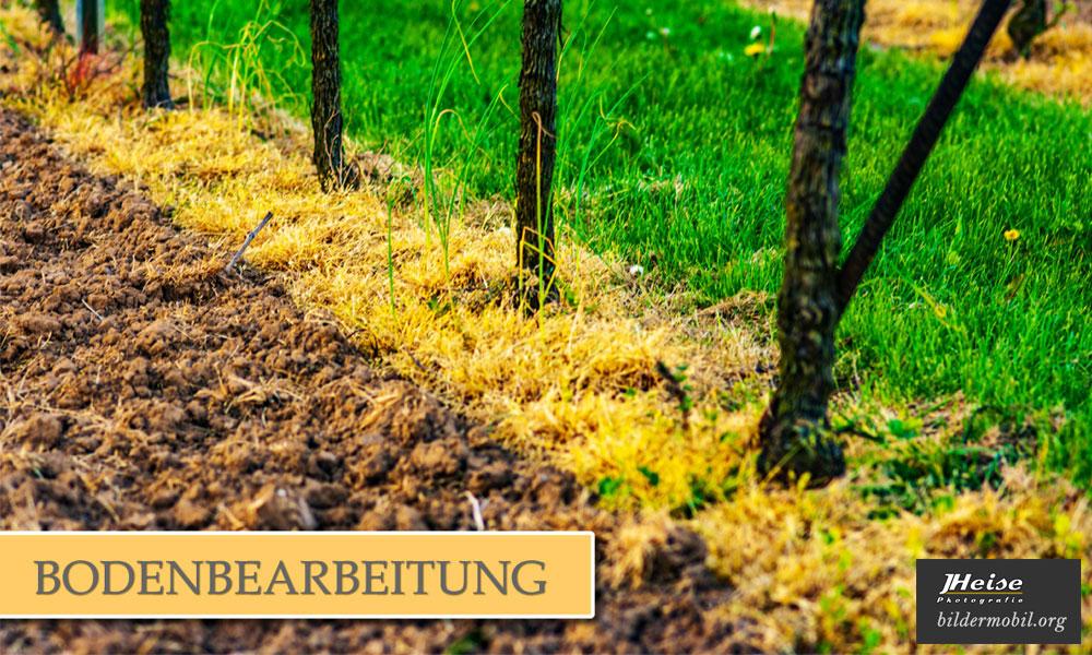 Weinreportagen von vinumtempore.de