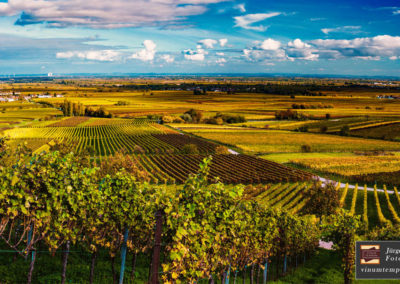 vinumtempore-Landschaft-1